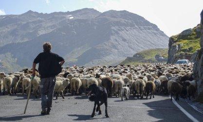 Filevorming op de Furkapas 2016 Zwitserland