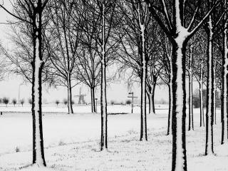 Winter in Hoogmade